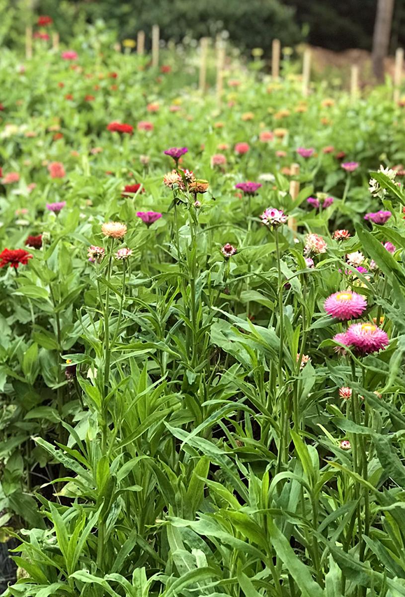 The Petaled Garden flower field, mixed flowers