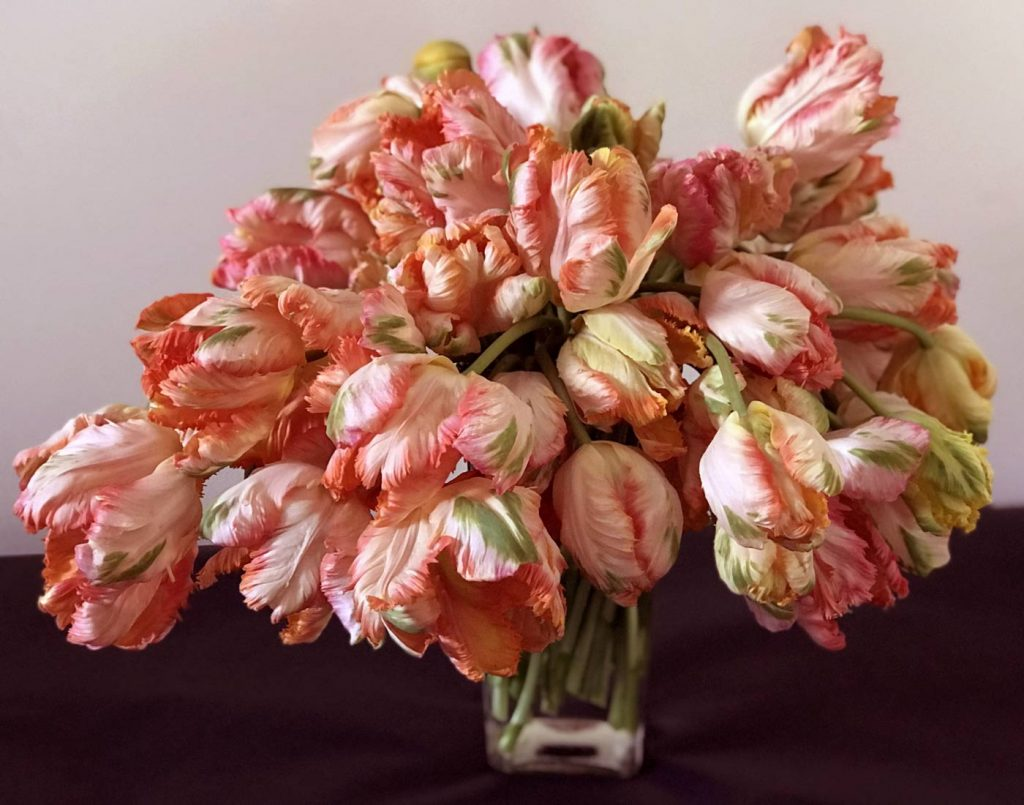 exotic parrot tulip arrangement, extra large bouquet, farm fresh tulips, peach and multi color