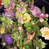 summer flowers, yellow and purple, CSA share flowers, flower farm harvest, flowers, fresh flowers