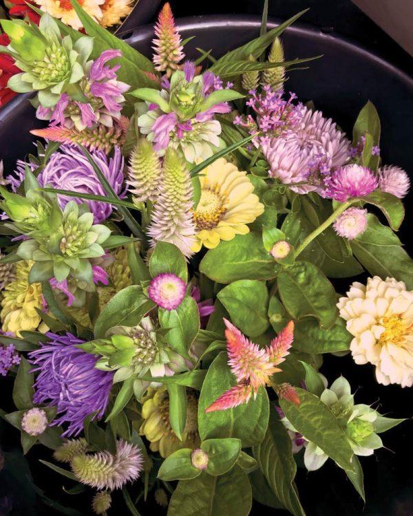 unusual summer farm flowers CSA, buckets of blooms