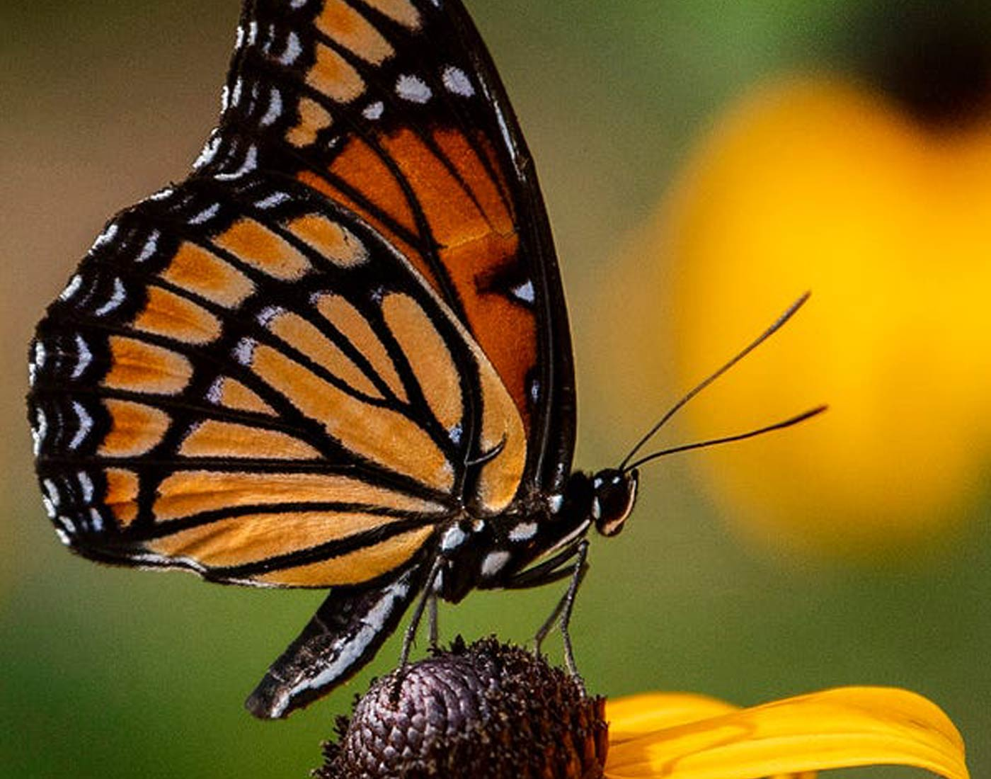 butterfly with flower