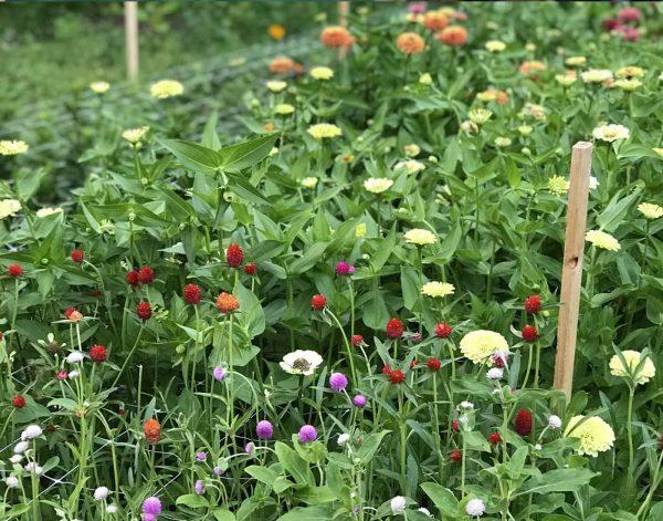 field of assorted farm flowers The Petaled Garden, summer flowers