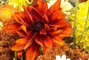 rudbeckia flowers, fall flowers, The Petaled Garden
