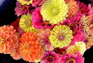zinnia floral bunch, CSA flowers, summer farm flowers, The Petaled Garden